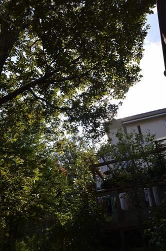 2013年 8-9月の庭…_c0124100_23512351.jpg