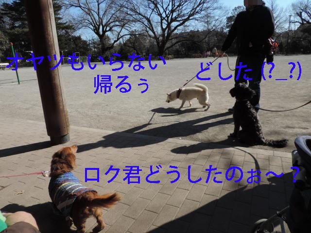 b0312810_1755883.jpg
