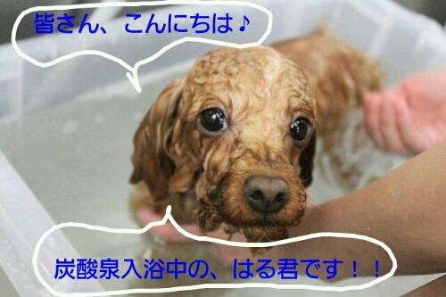 やばいでーす!!わら_b0130018_064246.jpg