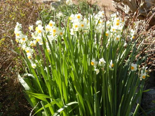 '14,1,29(水)春の予感!_f0060461_14201382.jpg