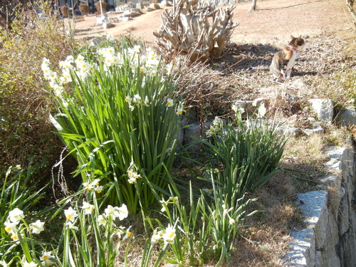 '14,1,29(水)春の予感!_f0060461_1421434.jpg
