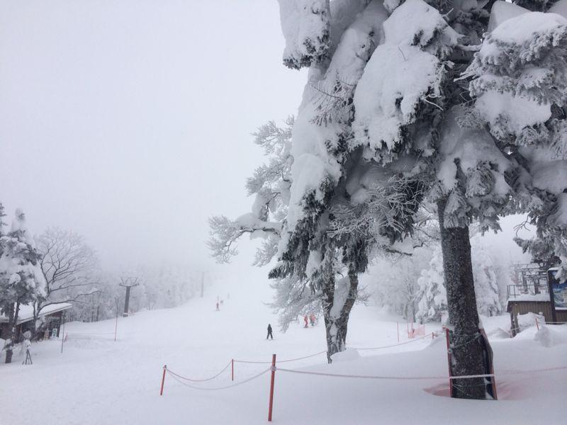 スキー(蔵王)_e0233674_21321680.jpg