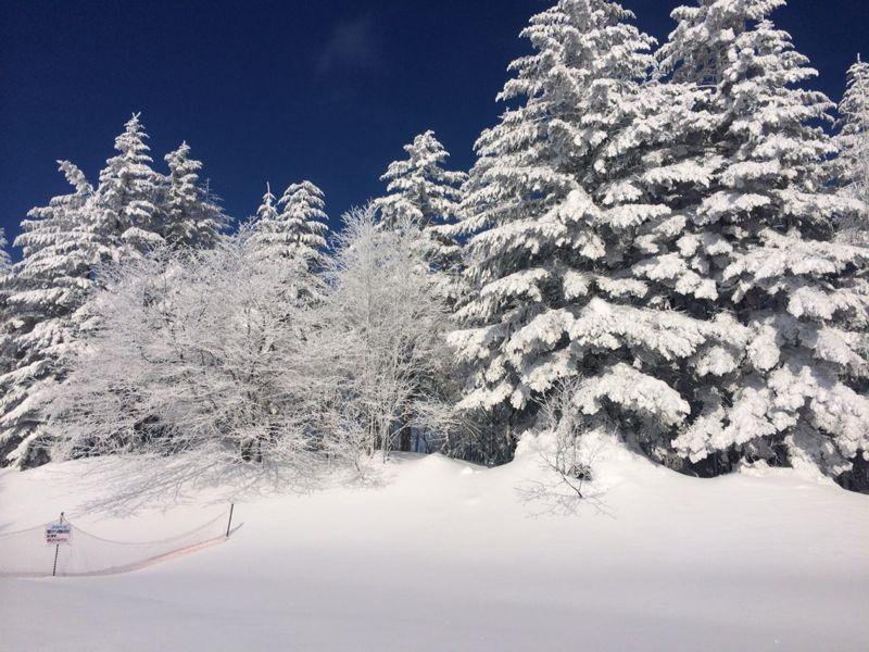 スキー(蔵王)_e0233674_2133432.jpg