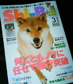 Shi-Ba  3月号発売されました_b0011075_17174757.jpg