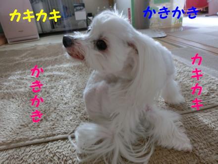b0193480_19564727.jpg