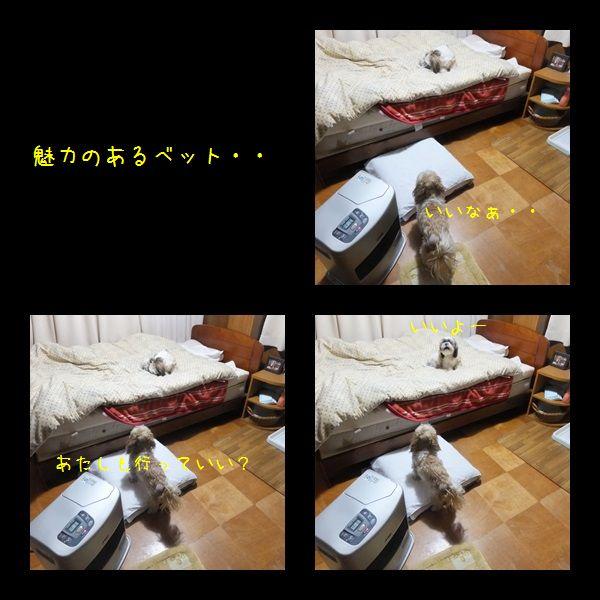 e0234881_20134254.jpg
