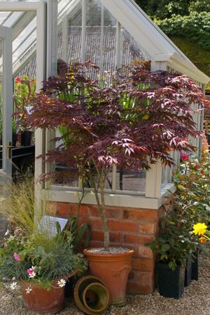 復元ポット2  at Hidcote Manor Garden_d0229351_19234983.jpg