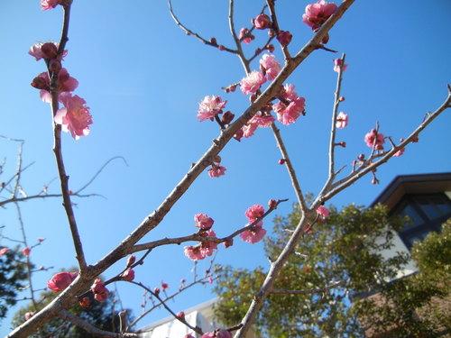 '14,1,30(木)春の兆し?_f0060461_11425867.jpg