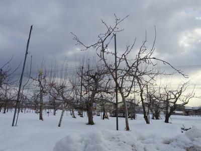 りんご畑    1・30_e0019167_935660.jpg