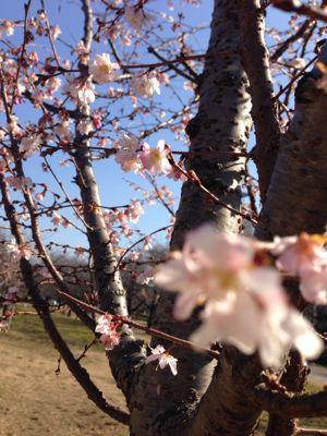 新芽の季節_c0082370_1939550.jpg