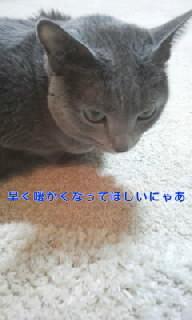 f0200871_0154344.jpg