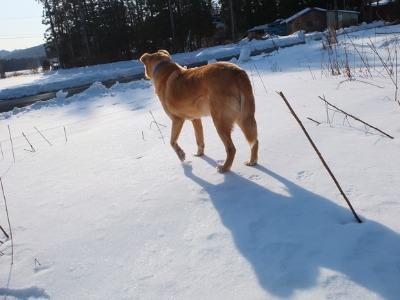 真冬の村 1:ゴロンサービスデー_a0180681_0175411.jpg