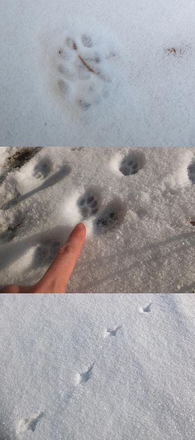 真冬の村 1:ゴロンサービスデー_a0180681_3182349.jpg