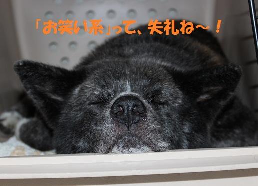f0121712_8385079.jpg
