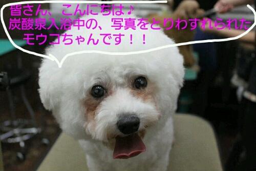 b0130018_045071.jpg