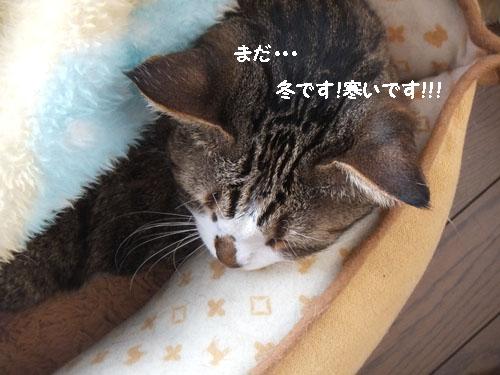 f0032418_92013100.jpg