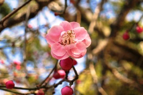 春の準備_a0259130_116341.jpg