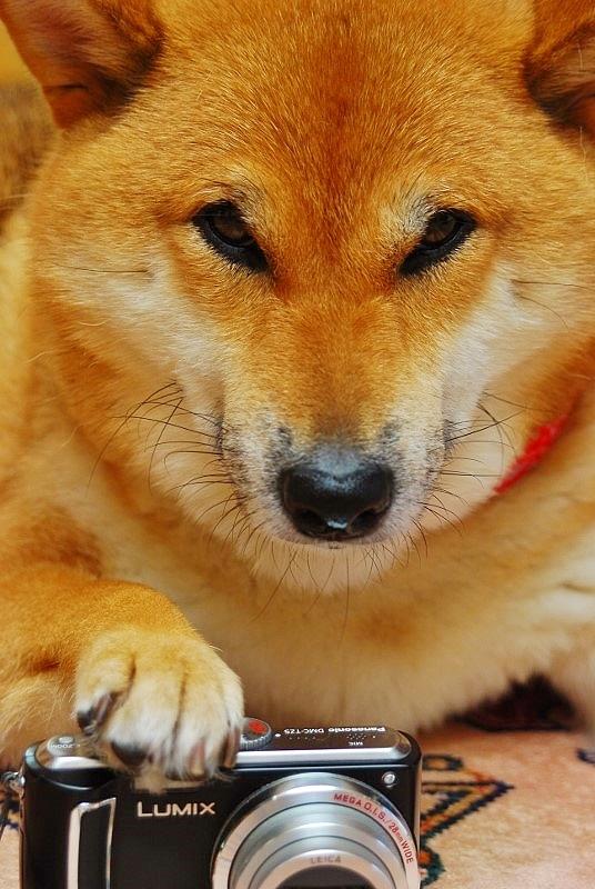 土門犬_b0314043_22195749.jpg