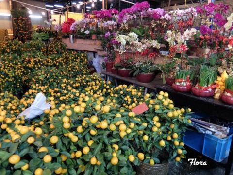 ♪春節①_c0247253_11412964.png