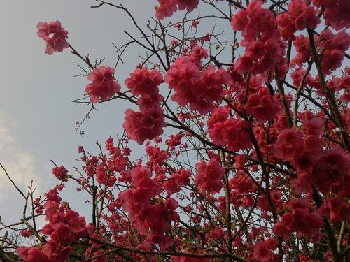 春爛漫のカケロマです。_e0220493_18165850.jpg