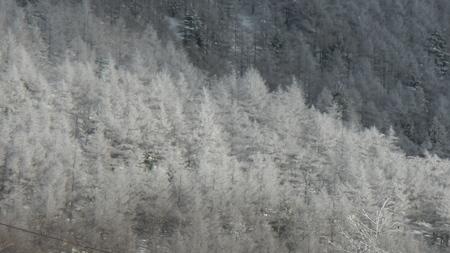 霧氷の朝_e0120896_9332396.jpg