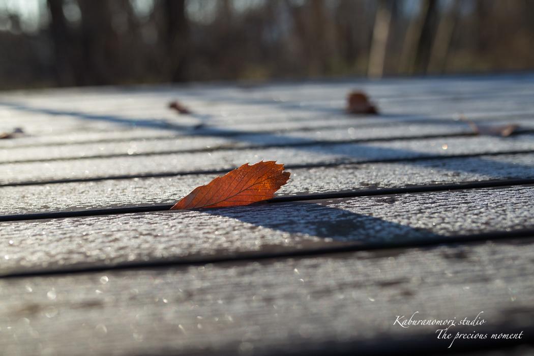 雪の無い冬_c0137403_16452421.jpg