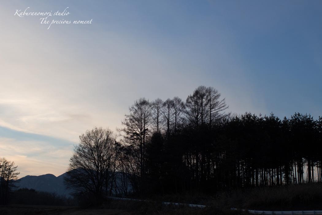 雪の無い冬_c0137403_1646162.jpg