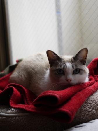 猫のお友だち くるみちゃんロクちゃん編。_a0143140_23115219.jpg