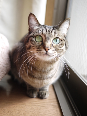 猫のお友だち くるみちゃんロクちゃん編。_a0143140_23121329.jpg