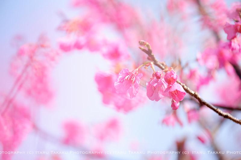 さくら咲く ~わんぱく小僧が帰ってきた~_b0186442_21511981.jpg