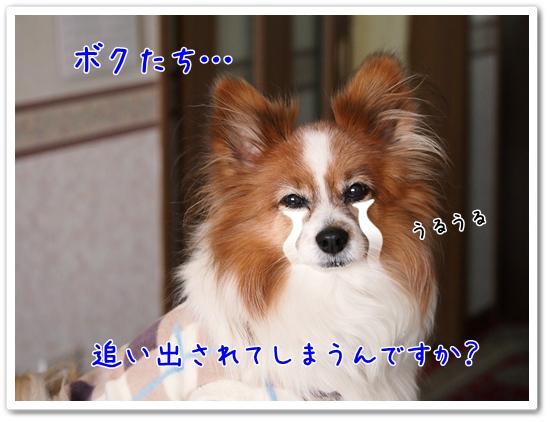 d0013149_23141958.jpg