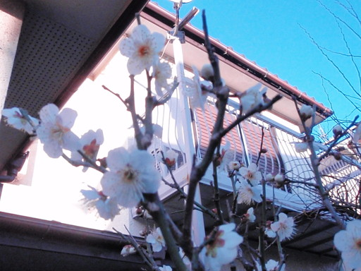 春の足音_a0207196_16242789.jpg