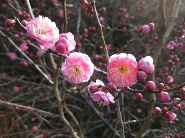 春うららか&初たま!_d0139806_1913367.jpg