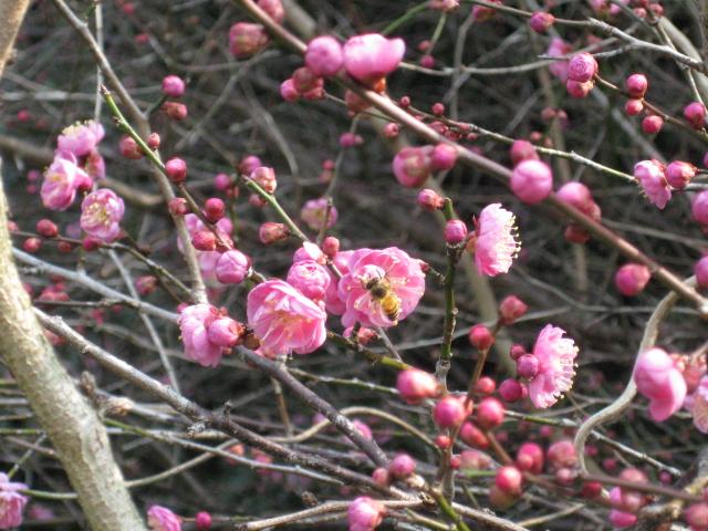 春うららか&初たま!_d0139806_1915232.jpg