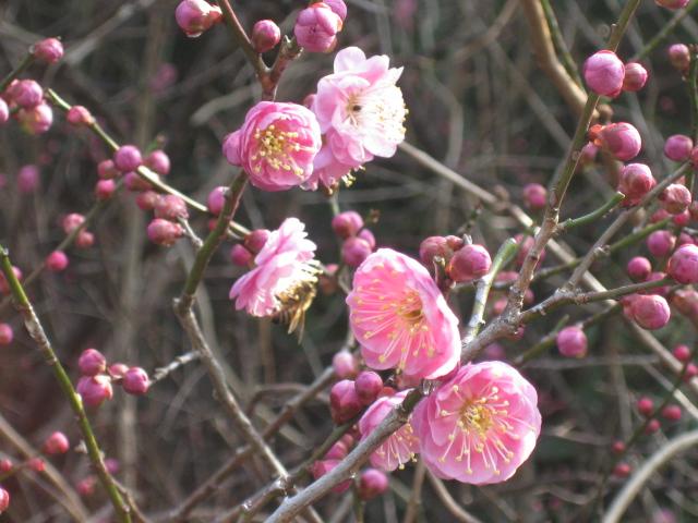 春うららか&初たま!_d0139806_1921623.jpg