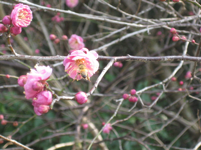 春うららか&初たま!_d0139806_192446.jpg