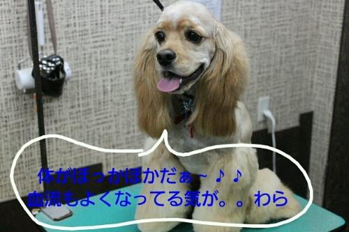 b0130018_038625.jpg