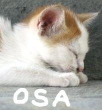 閉塞性睡眠時無呼吸患者におけるCPAP療法は短期的に中断も可能_e0156318_22135379.jpg