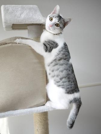 猫のお友だち むぎくん編。_a0143140_1752521.jpg