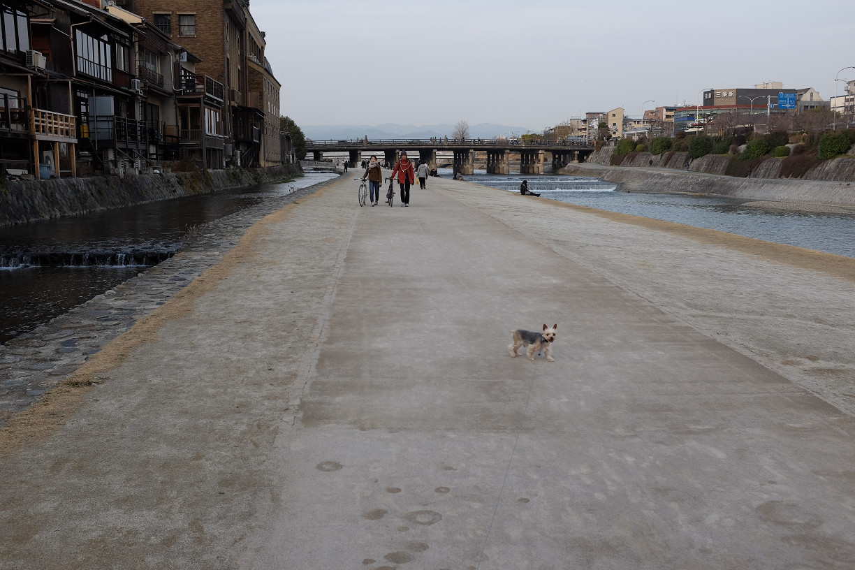 ルンルン!!  ワンコ散歩..._f0152550_17555093.jpg