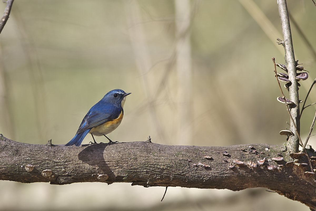 綺麗な成鳥との出会い_d0125872_1211042.jpg