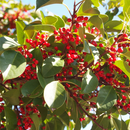 本州の可愛い植物探し_a0292194_16451811.jpg