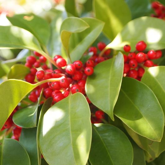 本州の可愛い植物探し_a0292194_16453517.jpg