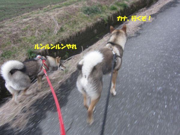 f0143123_2031057.jpg