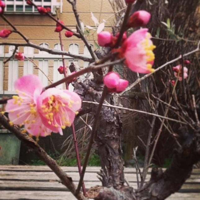 花のパンかご。_b0125443_1314520.jpg