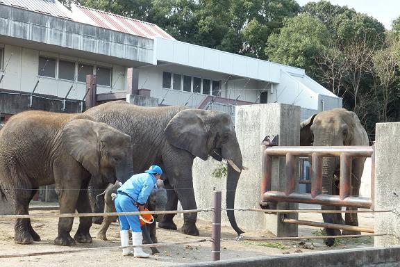 動物園見学3回説と絵本は人生に3度_e0272869_19330469.jpg
