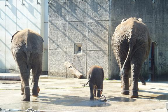 動物園見学3回説と絵本は人生に3度_e0272869_19333695.jpg