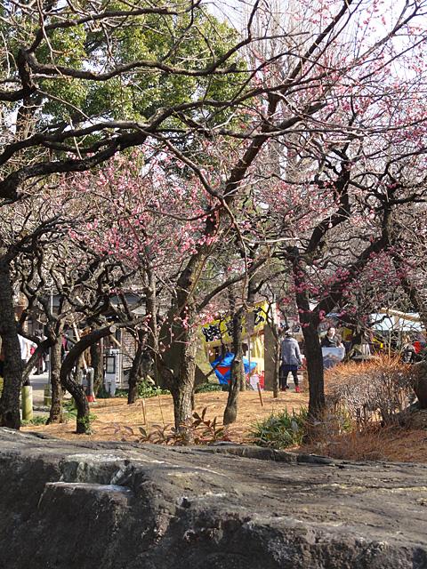 湯島天神 たこ焼きと梅 (2/3)_b0006870_23321795.jpg