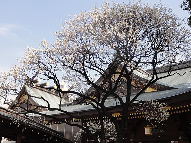 湯島天神 たこ焼きと梅 (2/3)_b0006870_23325330.jpg