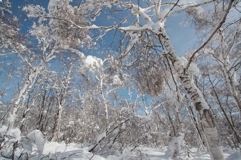 正月/雪_d0133581_21231423.jpg